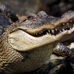 """""""Крокодилы"""" нападают на украинцев"""