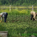На огороде поселились Ольга Кобылянская и Мисс Италия