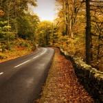 Дорога осень
