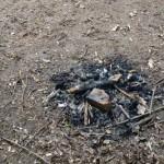 На «Вознесения» продолжают выжигать траву