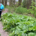 В Львове и области «изобилуют» ядовитые растения, а чиновникам и фитослужби нет до них дела