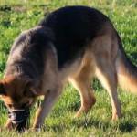 В поисках розыскной собаки. Кто поможет родственникам пропавших без вести?