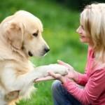 Комфорт для четвероногих: будут ли во Львове «собачьи» площадки