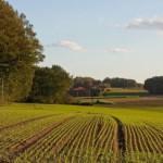 На Перемишлянщини вернули незаконно захваченные земли стоимостью более 35 миллионов гривен