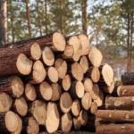 На Львовщине за незаконную вырубку деревьев осудили мастера леса