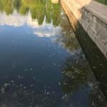 Дохлая рыба на Левандивському озере является следствием зарыбление (фото, видео)