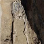 """Во время раскопок во Львове обнаружили останки более 50 заключенных Пересыльной тюрьмы """"?25"""