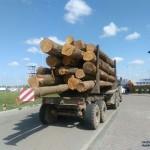 Правоохранители задержали грузовик, перевозивший незаконно срубленные деревья