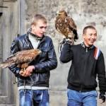 """На Львовщине снова появились """"предприниматели"""", эксплуатирующих хищных птиц?"""