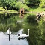 В водоеме Стрыйского парка теперь водятся рыбы