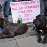 Львовян призывают приобщиться к зоозащитной акции