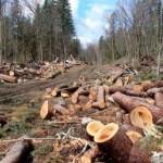 На Львовщине экологи поймали экс-главу местной полиции на незаконной вырубке леса