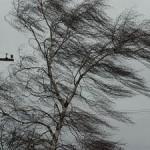 Сильный ветер повредил колледж Львовского Национального Аграрного Университета