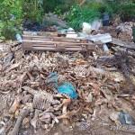 На Львовщине обнаружили свалку животных отходов с африканской чумой