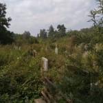 В Львове Голосковское кладбище превратился в джунгли