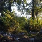 Кости перемешаны с мусором: во что превратили кладбище в Жолкве
