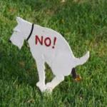 Во Львове владельцев собак обяжут убирать за своими любимцами