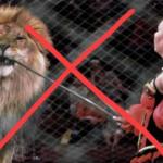 Во Львовском цирке больше не будет представлений с животными?