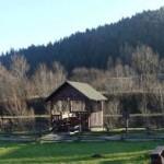 На Львовщине продают земли детского оздоровительного лагеря по 3 доллара за м2