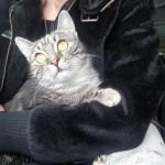 Кошечке, которую живодеры выбросили из многоэтажки, нашли семью