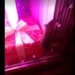 В бутике известного бренда одежды во Львове обнаружили крысу (видео)