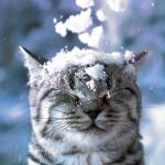 Синоптики рассказали, когда в Львове ждать снега
