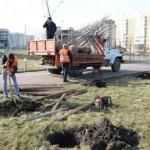 На Сыхове, на месте уничтоженных вандалами деревьев, посадили новые сакуры