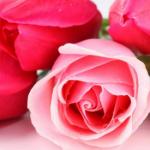 Изысканность в подарок: чем магазин «Цветочный дом» удивляет украинцев накануне 8 марта