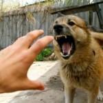 Все село на карантине: на Львовщине обнаружили бешеную собаку