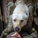 «На дембель»: собака с передовой ищет семью в Львове