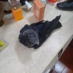 В гибели 5-летнего мальчика на Львовщине виновной является ворона
