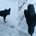 В Городке завхоз школы на глазах детей убил бездомную собаку и бросил его в реку
