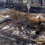 На Львовщине горел сельское кладбище (фото)