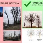 Петиция против варварской обрезки деревьев во Львове за сутки собрала необходимые подписи