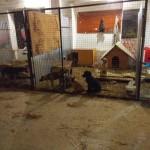 Львовские волонтеры ищут территорию для временного размещения шести вольеров с собаками