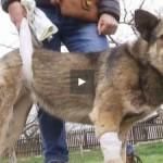 На Львовщине мужчина из ружья расстрелял пса, который раздражал его лаем