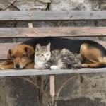 Во Львове просят обустроить пункты обогрева для бездомных животных