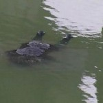 В реке на Львовщине нашли тело мужчины