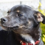 Во Львове разыскивают владельцев собаки, у которого обнаружили бешенство
