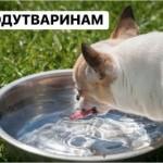 """""""Воду животным"""": активисты призывают поить уличных котов и собак"""