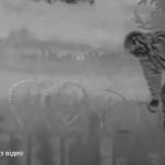 Польские пограничники задержали россиянина, который пешком перешел границу с Украиной