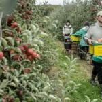 Более трети украинских крестьян уезжают на заработки
