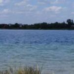"""В озере """"Задорожное"""" массово гибнут рыба и раки"""