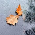 Синоптики рассказали, какой будет погода до конца недели