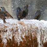 Мчс предупредили о сильных заморозков в Украине
