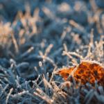 На этой неделе в Украине синоптики прогнозируют ночные заморозки до -4
